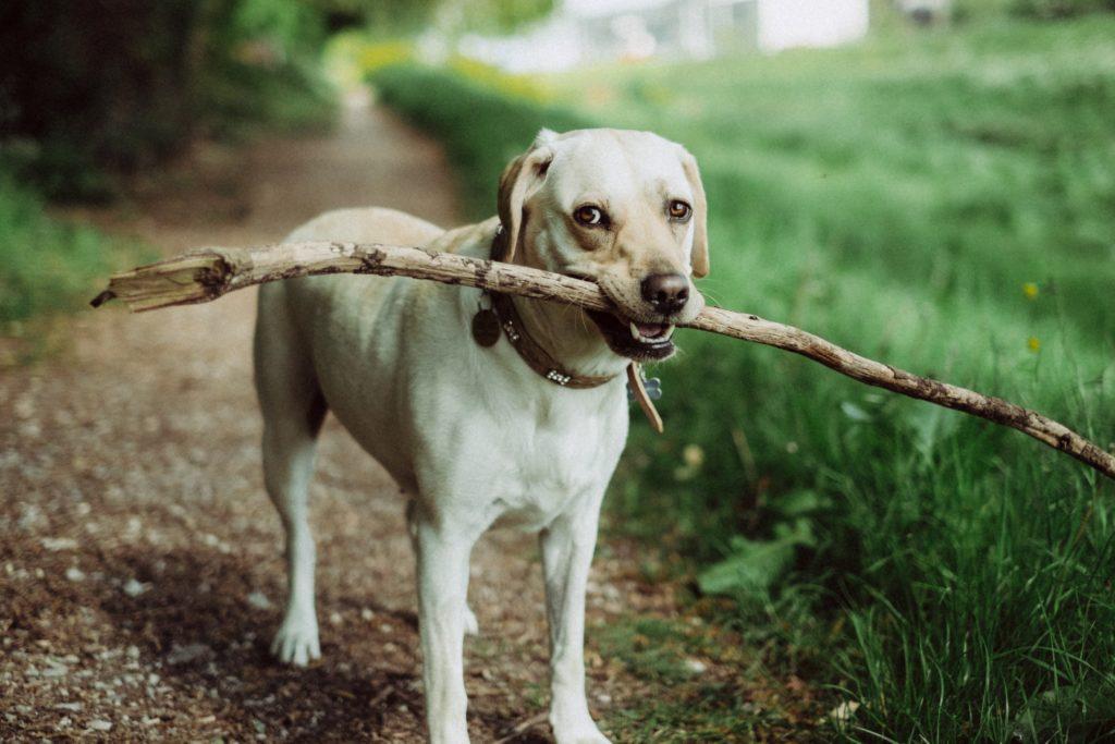 cachorro com galho de arvore franquia de plano de saude para animais